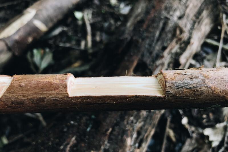 スクエアノッチ加工した枝
