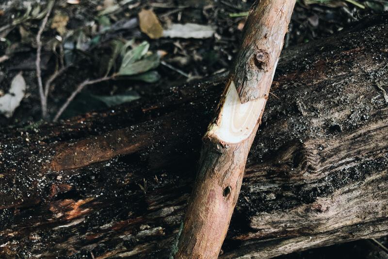 ポットフックノッチ加工した枝