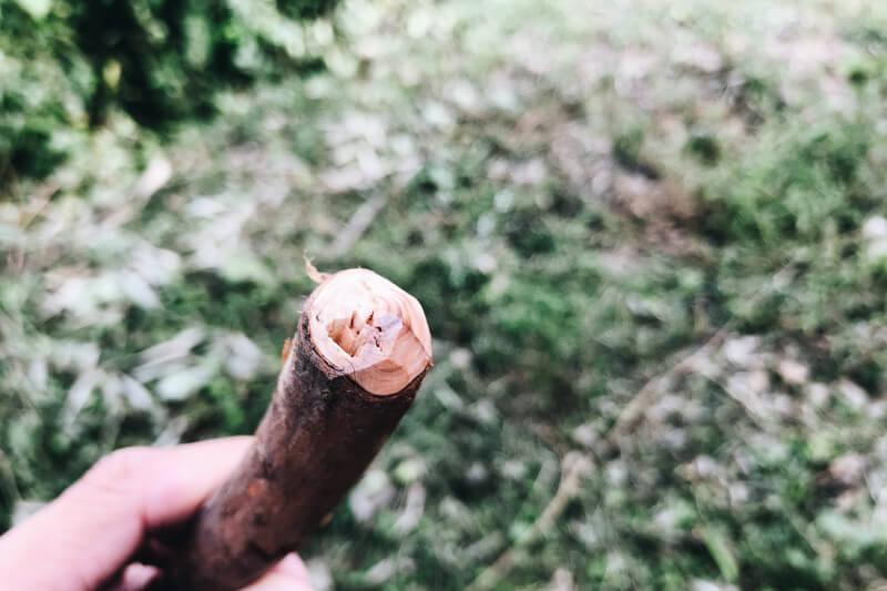 エンドカット加工した枝