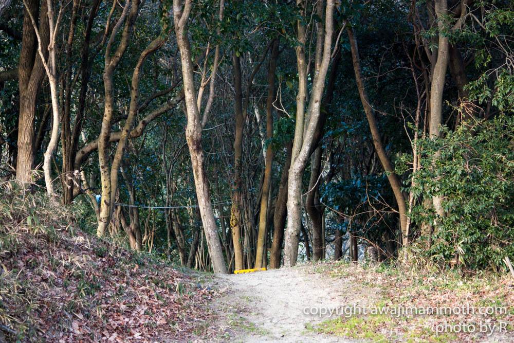 マンモスの森