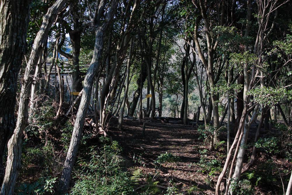 マンモスの森の風景