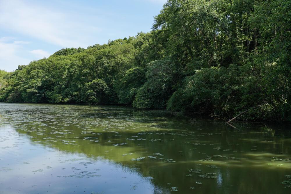 淡路島マンモスの湖畔の遊歩道から見える湖