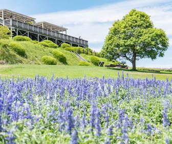 淡路島の植物園と花スポットあわじ花さじき