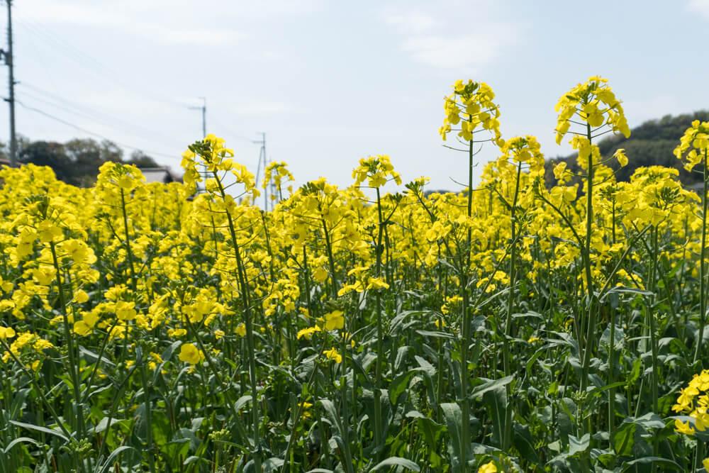 淡路島の植物園と花スポットまとめ