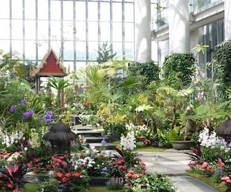 淡路島の植物園と花スポット淡路夢舞台温室「奇跡の星の植物館」