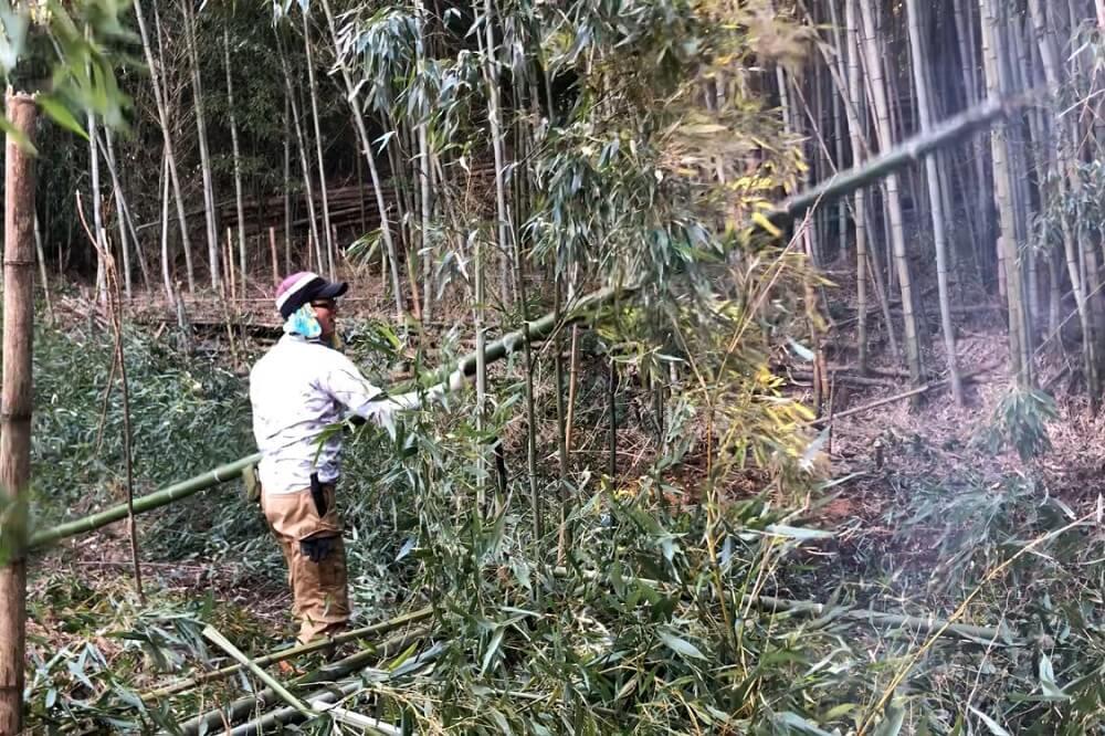パンプトラックを作るために竹を切る